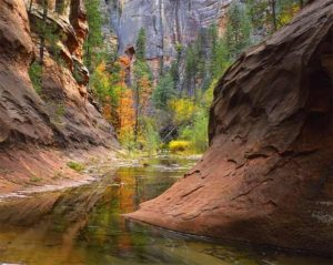 West Fork of Oak Creek Canyon | Sedona, AZ
