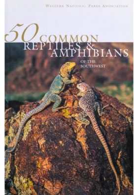 50 Common Reptiles & Amphibians (2 Mb)