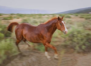 Galloping horse in rain storm, Arizona