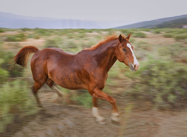 Galloping horse in rain storm, Arizona